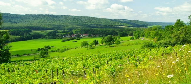 1346145408_Apance Amance-vignes de Coiffy le Haut